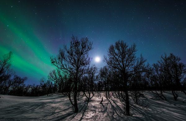 Arctic-365